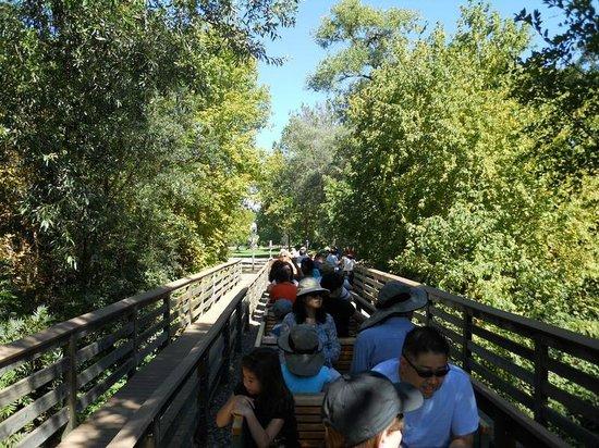 Billy Jones Wildcat Railroad: Crossing Los Gatos Creek Bridge