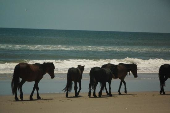 Rick's Jeep Adventures : Horses head for the water's edge