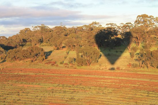 Barossa Balloon Adventures: reflection