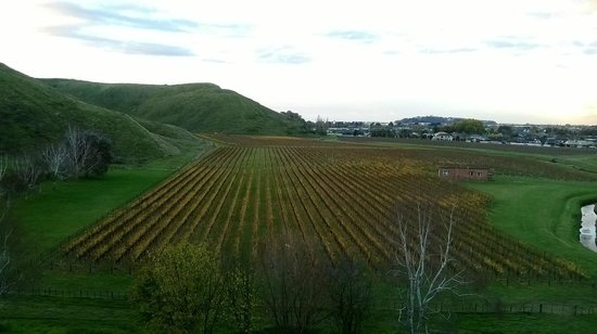 Bay Tours and Charters : View from Mission Estate Vineyard