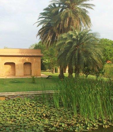 The Oberoi Rajvilas : the grounds