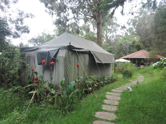 The Fern Creek: Swiss Tent with Green Surroundings