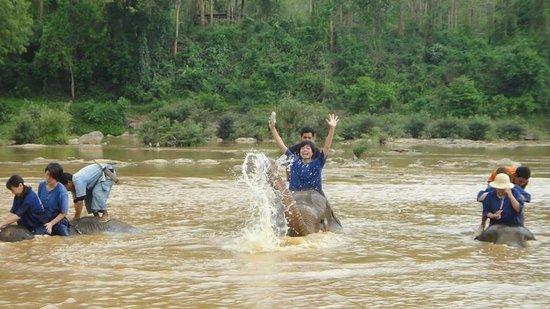 All Lao Elephant Camp : Elephant Bahting