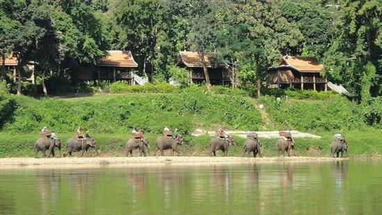 All Lao Elephant Camp : Riding big group