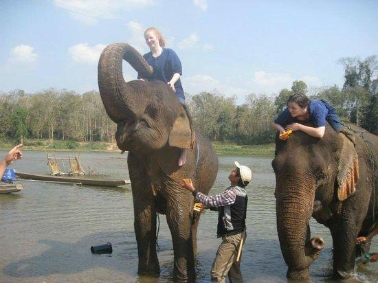 All Lao Elephant Camp : Feed Elephant