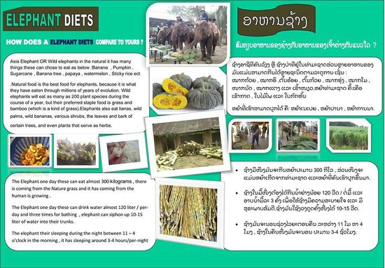 All Lao Elephant Camp - Day Tours: Elephant food