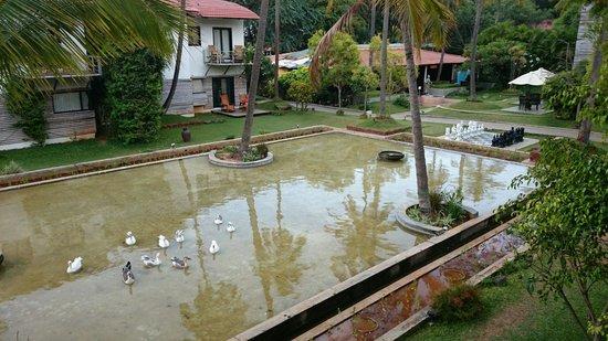 The Windflower Resort & Spa, Mysore: Jardin et ligne d'eau