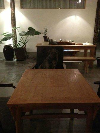 Beijing Wohkoon Hostel-Nan Luo Gu Xiang Branch: blackie, the hotel dog