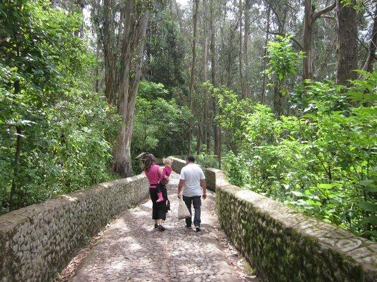 Peguche Waterfall: Trail