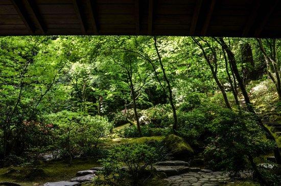 Portland Japanese Garden: View from the garden