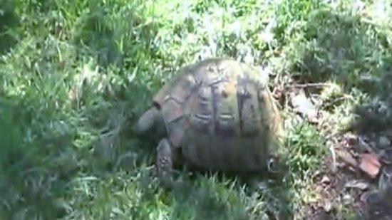Kassiopi Resort Memento Hotel: Turtles area