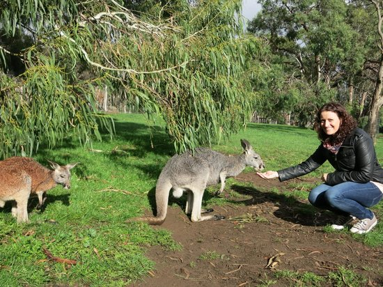 Escapegoat Adventures: Feeding the kangaroos at Cleland wildlife park