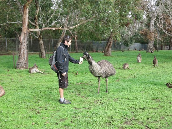 Escapegoat Bike - Day Tours: Feeding an ostrich at Cleland