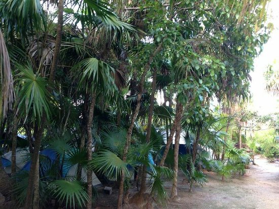 Cenote Encantado: Campground in the jungle. We loved it!