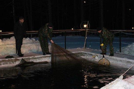 Russian Fishing Restaurant in Komarovo: Поймалю ту форель в которую ткнул пальцем.