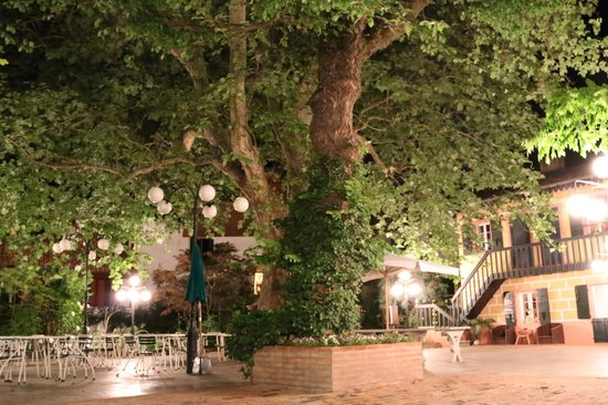 Quattro Fontane Hotel: 300 yo oak tree the oldest on the island