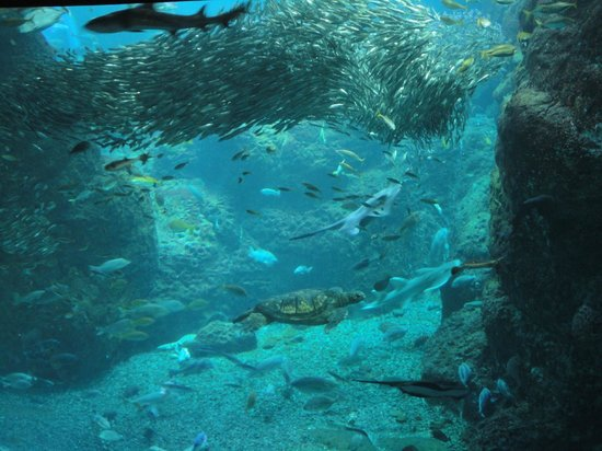 Enoshima Aquarium : A giant turtle, shark, and a group of a small fish in one tank