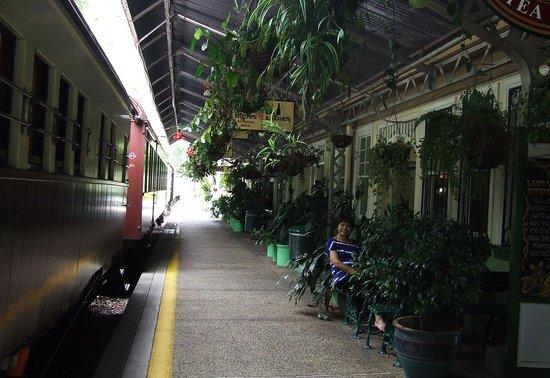 Kuranda Scenic Railway: Lush Green Station - Kuranda