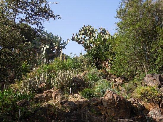 Jardi Botanic Marimurtra : Vistes 1