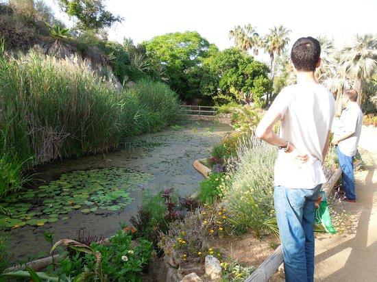 Jardi Botanic Marimurtra : Estanc