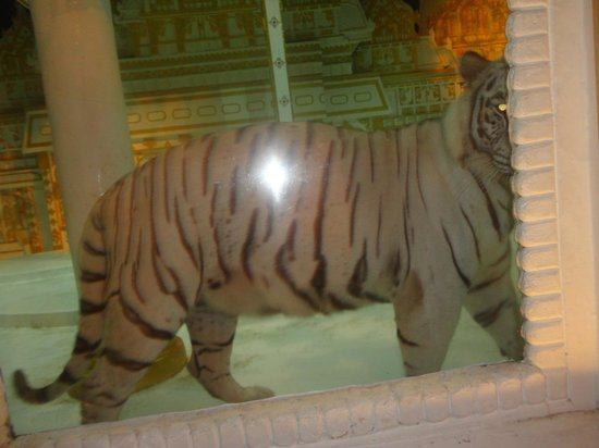 Phuket FantaSea: white tiger inside