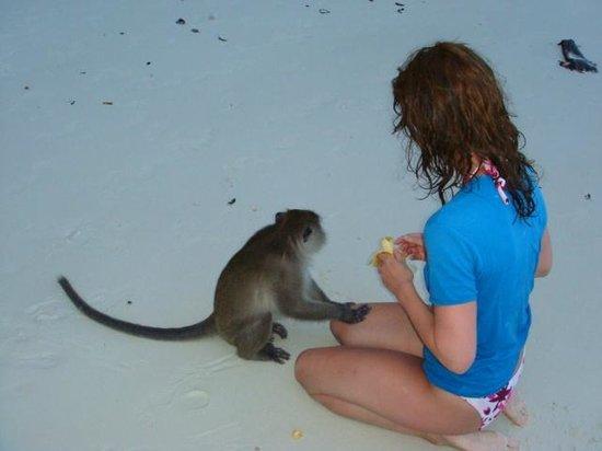 Phi Phi Andaman Legacy: île aux singes