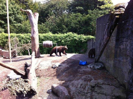 Copenhagen Zoo: Tiere