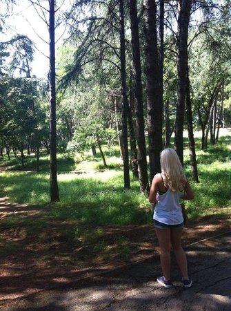 Hotel Laguna Mediteran: Hotel forest