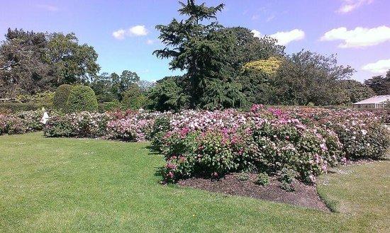 Royal Botanic Gardens Kew: giardino delle rose