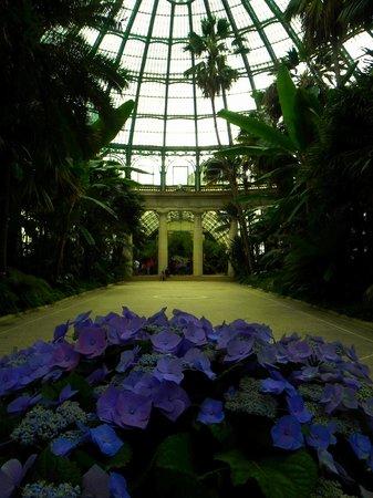 Serres Royales De Laeken: Vue intérieure