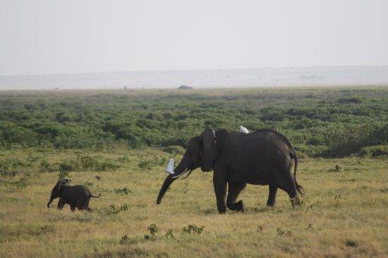 First African Dream Tours & Safaris : Elephants