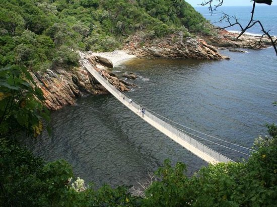 BokBus Garden Route Adventure Tours - Day Tours: Storms River - Tsitsikamma National Park Hike