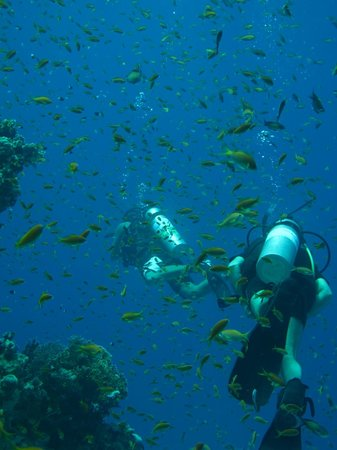 Ocean College Dive Centre : More fish!