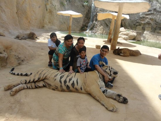 Tiger Temple Thailand Tour : feel the touch