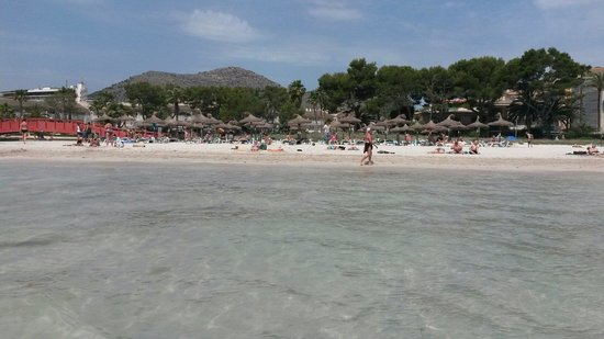 BelleVue Club: Alcudia beach great for kids as it isnt deep lovely and clean could almost be tropical