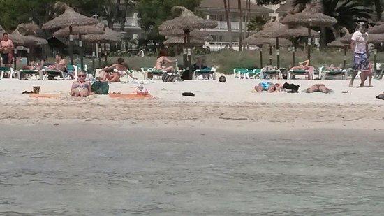 BelleVue Club: Alcudia beach