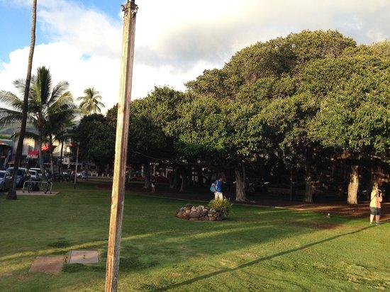 Banyan Tree Park