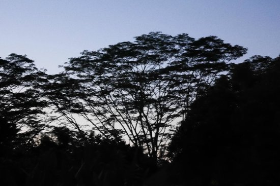 Alila Ubud : dawn