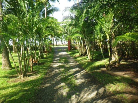 Beso del Viento: The walk to the beach