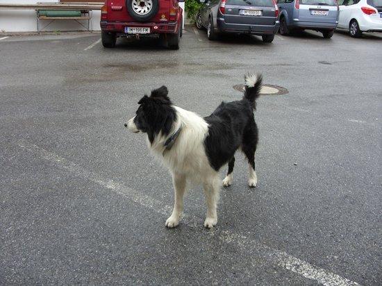 """Seewald Gasthof: Der Freundliche Wachhund""""Benn"""""""