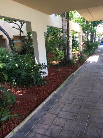Boca Raton Plaza Hotel and Suites: walkway to the tiki bar,pool and jacuzzi