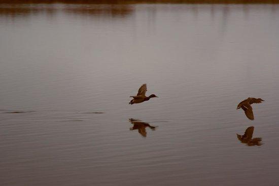 Kaldbaks-kot Cottages: Wildlife and birds aplenty