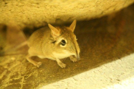 Prager Zoo: Пражский зоопарк