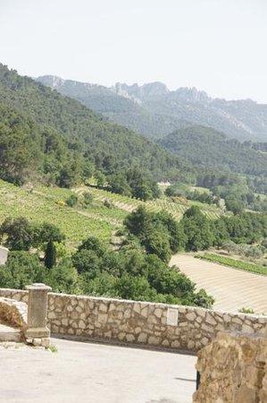 Wine Safari: mountain top view of hillside vineyard.