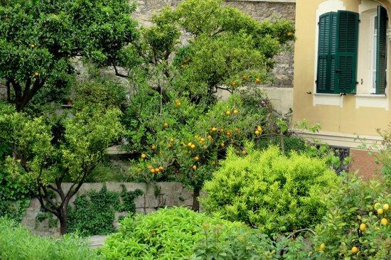 Hotel Ariston : Вид на сад из номера