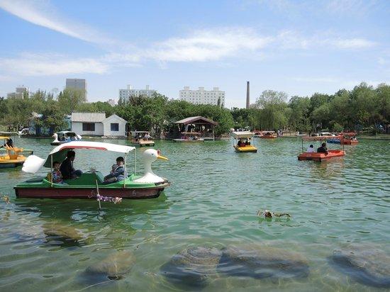 Urumqi Botanical Garden: Водоем в саду.