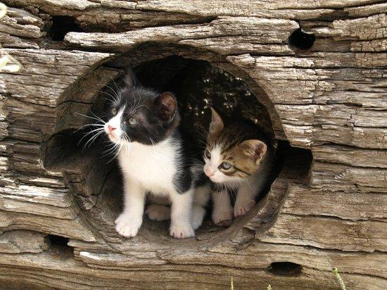 Villa Kerasia : Chika´s Katzenbabys