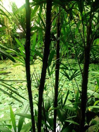 Jardin Botanico Jose Celestino Mutis: Invernadero
