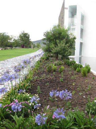 Hacienda Cantalagua: jardines hermosos