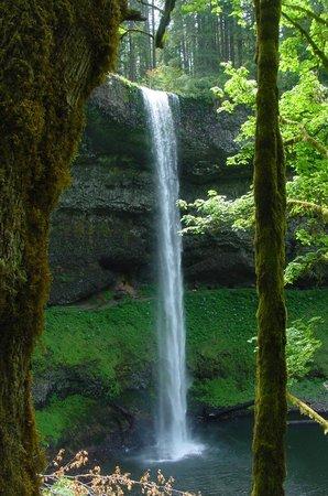 Silver Falls State Park: Silver Falls #5